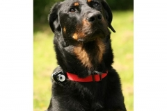 Kamera pro psy Eyenimal Dog CAM