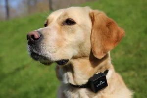 Obojek pro psa s GPS