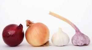 Česnek a cibule