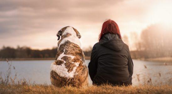 Separační úzkost u psa