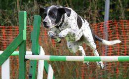 Agility - sport k upevnění vztahu mezi člověkem a psem