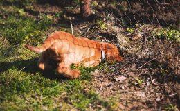 Elektronický neviditelný plot - pes utíká řešení
