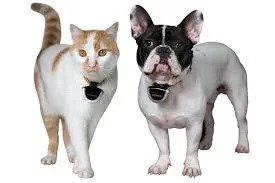 Obojek s kamerou pro psa i kočku