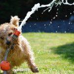 Hračky pro psy - lasery, automatické vrhače míčků