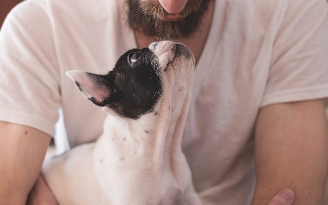 5 signálu psí lásky